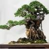 盆栽の市場規模と販売額を上げるためには無形文化遺産に登録すべき